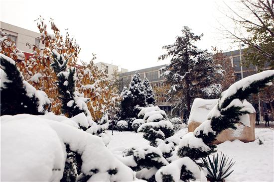 职大雪景美如画 赏雪扫雪两不误图片